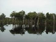 <h2><hr><u>LA INTERNACIONALIZACIÓN DE LA AMAZONIA</h2></u>